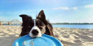 Aktywne wakacje z psem last minute